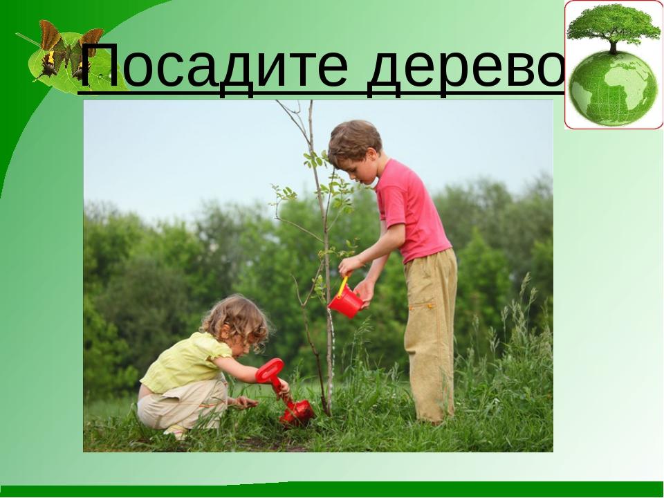Посадите дерево.