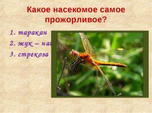 Какое насекомое самое прожорливое? таракан жук – навозник стрекоза