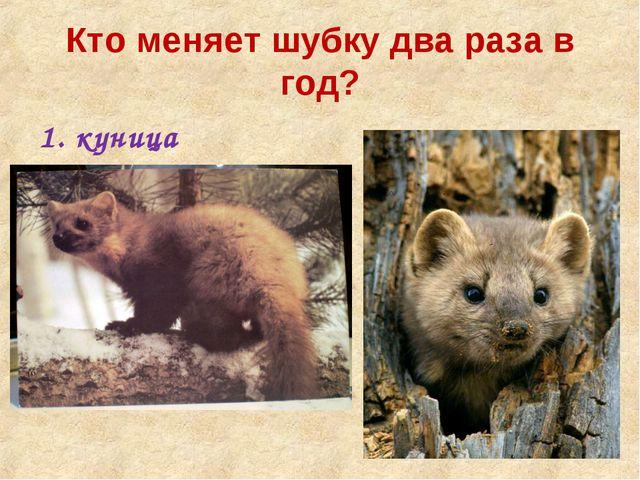 Кто меняет шубку два раза в год? куница медведь енот