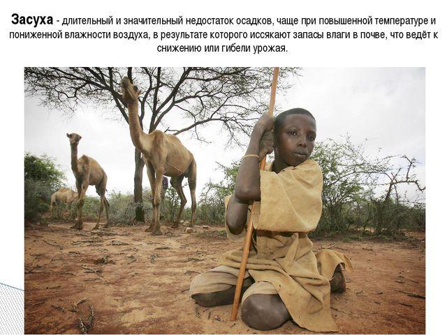 Засуха - длительный и значительный недостаток осадков, чаще при повышенной те...