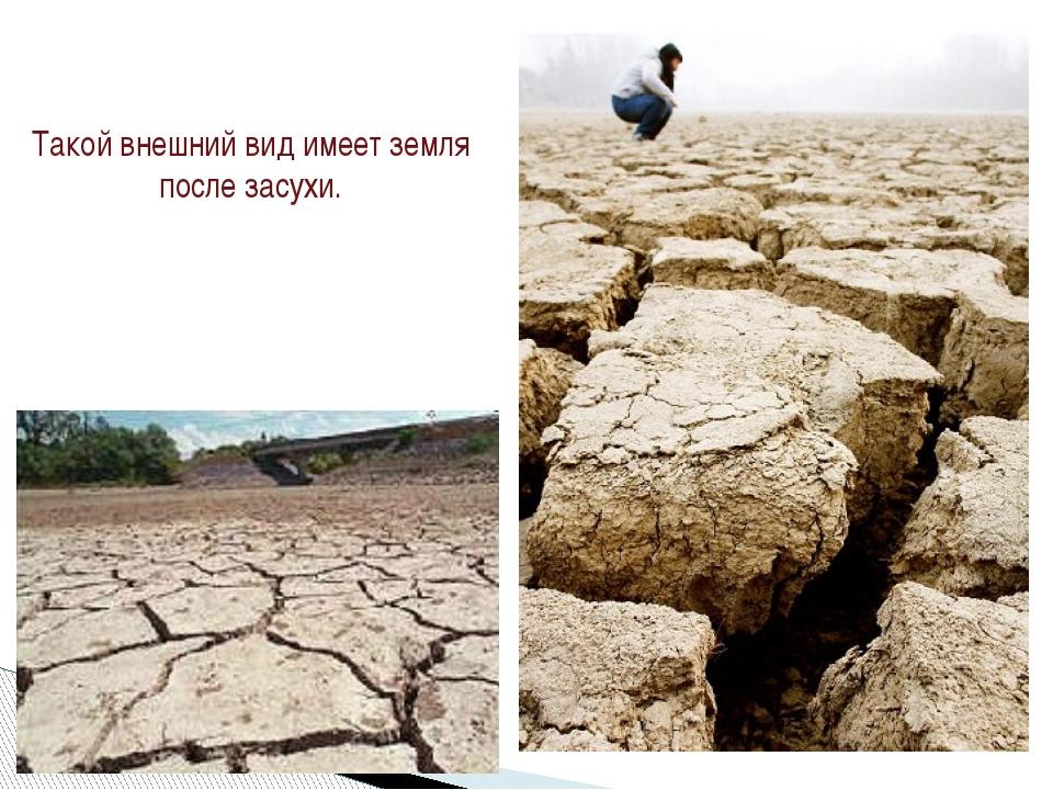 Такой внешний вид имеет земля после засухи.