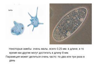 Некоторые амебы очень малы, всего 0.25 мм. в длине, в то время как другие мо