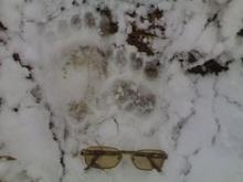 G:\П-К\картинки\следы\следы медведя.jpg