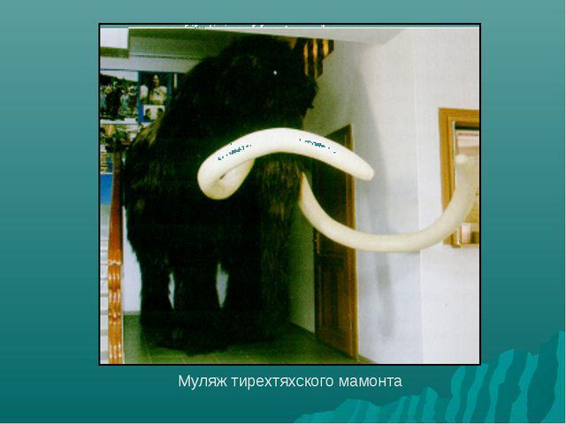 Муляж тирехтяхского мамонта