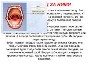 Зубы выполняют важную работу - они измельчают пищу. Без здоровых зубов не мож