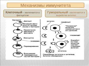Механизмы иммунитета Клеточный – заключается в фагоцитозе Гуморальный –заключ