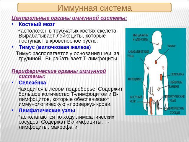 Иммунная система Центральные органы иммунной системы: Костный мозг Расположен...