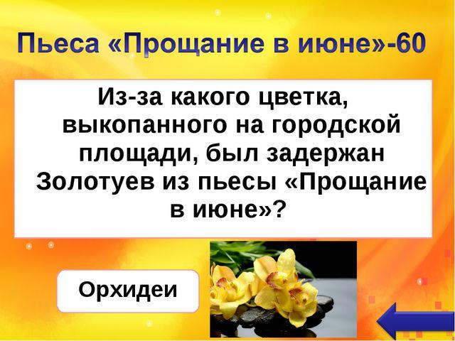 Из-за какого цветка, выкопанного на городской площади, был задержан Золотуев...