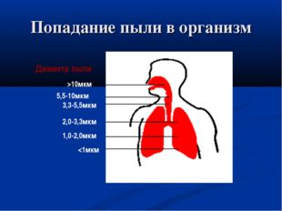 Попадание пыли в организм >10мкм 5,5-10мкм 3,3-5,5мкм 2,0-3,3мкм 1,0-2,0мкм