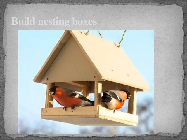 Build nesting boxes