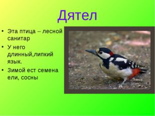 Дятел Эта птица – лесной санитар У него длинный,липкий язык. Зимой ест семена