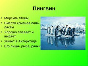 Пингвин Морские птицы Вместо крыльев лапы-ласты Хорошо плавает и ныряет Живет