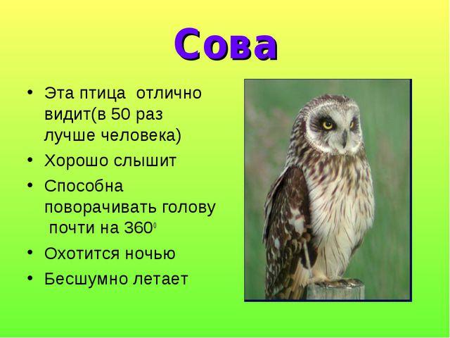 Сова Эта птица отлично видит(в 50 раз лучше человека) Хорошо слышит Способна...