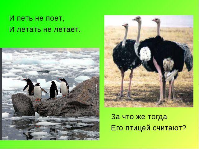 И петь не поет, И летать не летает. За что же тогда Его птицей считают?