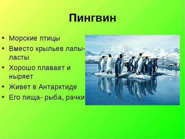 Пингвин Морские птицы Вместо крыльев лапы-ласты Хорошо плавает и ныряет Живет...
