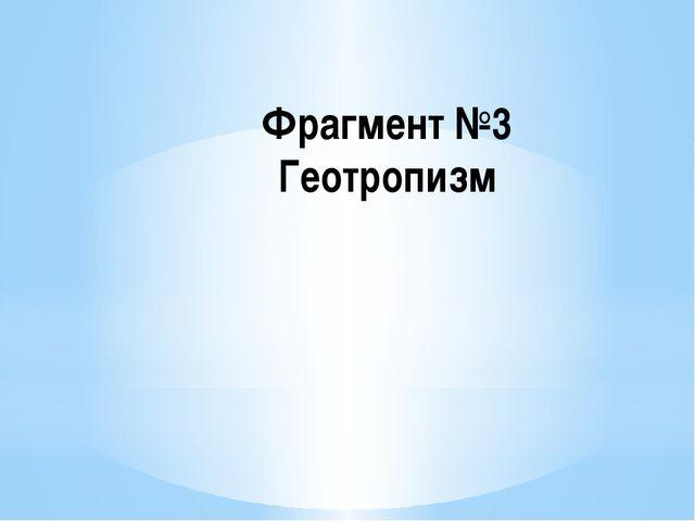Фрагмент №3 Геотропизм