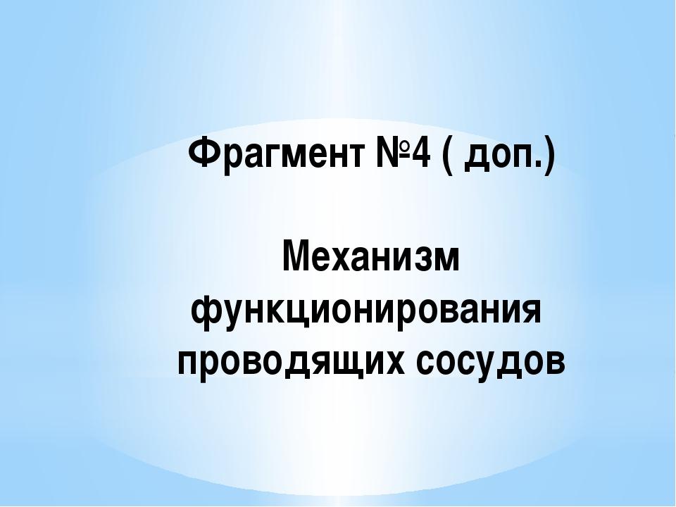 Фрагмент №4 ( доп.) Механизм функционирования проводящих сосудов