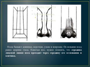Носы бывают длинные, короткие, узкие и широкие. Основание носа равно ширине