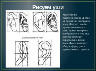 Рисуем уши Уши обычно расположены на уровне от бровей до основания носа. Для
