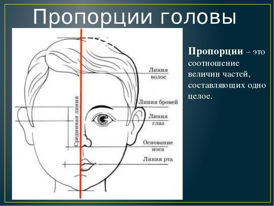 Пропорции головы человека Пропорции – это соотношение величин частей, состав...