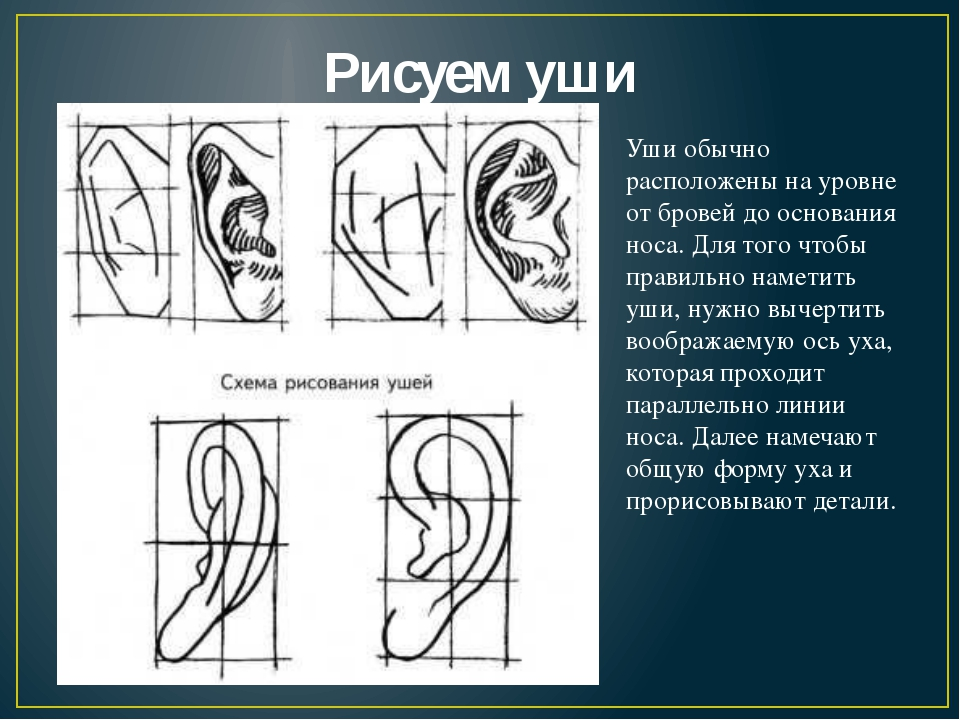 Рисуем уши Уши обычно расположены на уровне от бровей до основания носа. Для...