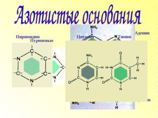 Пуриновые Аденин Гуанин Пиримидин Цитозин Тимин