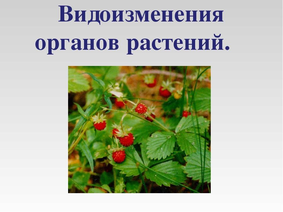 Видоизменения органов растений.