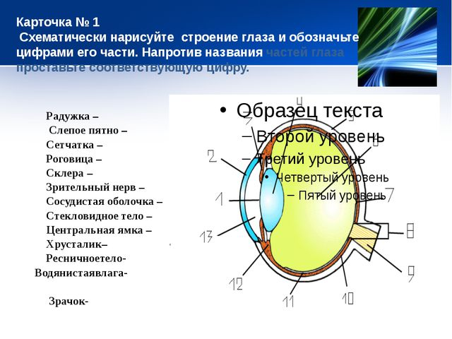 Карточка № 1 Схематически нарисуйте строение глаза и обозначьте цифрами его ч...