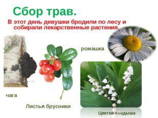 Сбор трав. В этот день девушки бродили по лесу и собирали лекарственные расте
