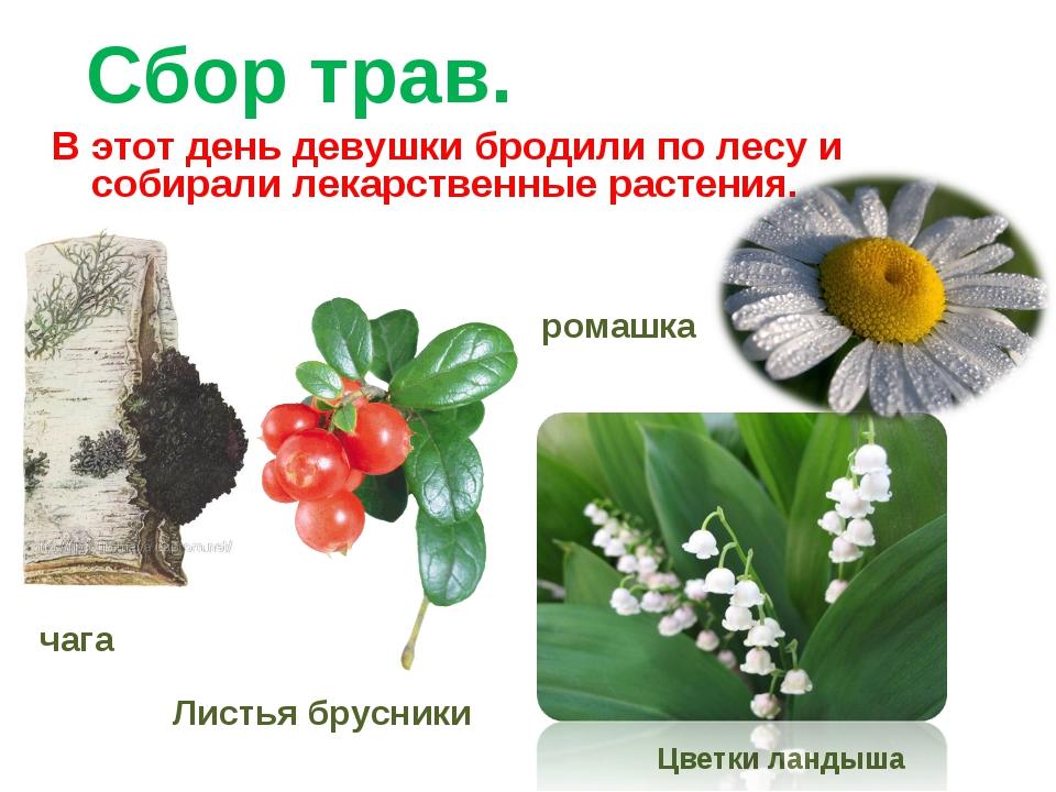 Сбор трав. В этот день девушки бродили по лесу и собирали лекарственные расте...