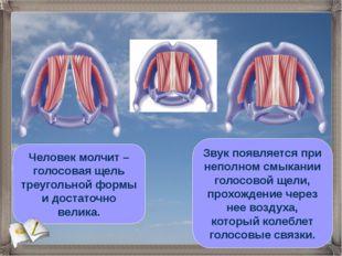 Человек молчит – голосовая щель треугольной формы и достаточно велика. Звук п