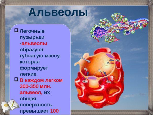 Альвеолы Легочные пузырьки -альвеолы образуют губчатую массу, которая формиру...