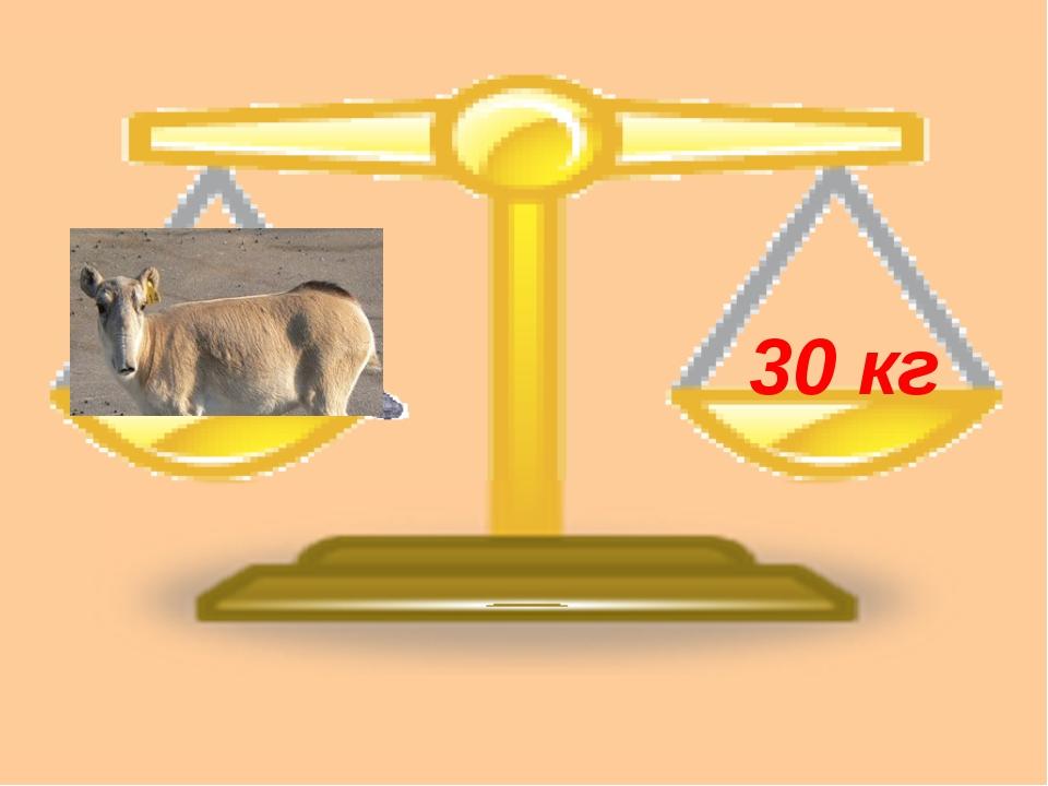 30 кг