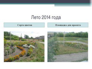 Лето 2014 года Сорта цветов Площадка для проекта