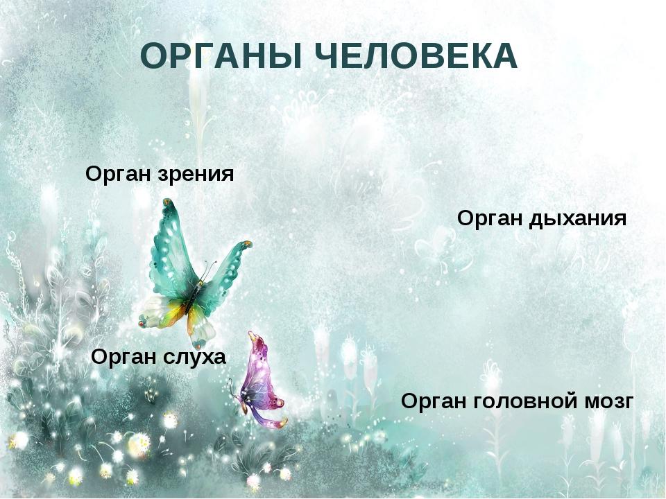 ОРГАНЫ ЧЕЛОВЕКА Орган зрения Орган слуха Орган дыхания Орган головной мозг