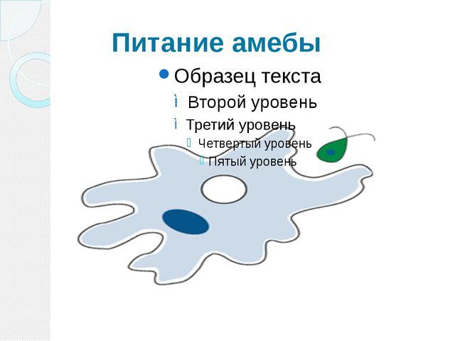 Питание амебы