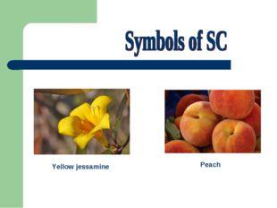 Peach Yellow jessamine