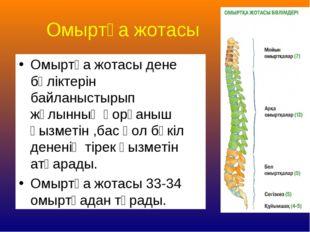Омыртқа жотасы Омыртқа жотасы дене бөліктерін байланыстырып жұлынның қорғаныш