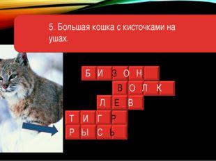 5. Большая кошка с кисточками на ушах. Б И З О Н В О Л К Л Е В Т И Г Р Р Ы С Ь