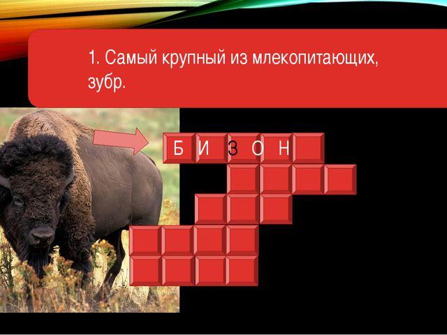 1. Самый крупный из млекопитающих, зубр. Б И З О Н
