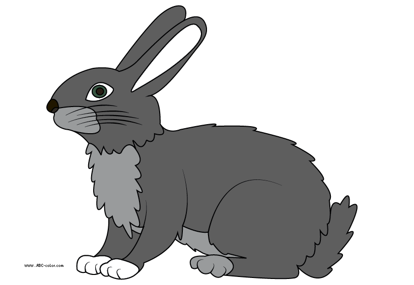 http://www.abc-color.com/image/coloring/animals/001/hare/hare-picture-color.png