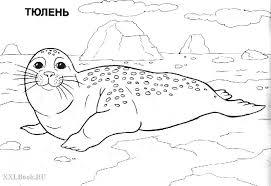 Картинки по запросу рисунок карандашом Арктика