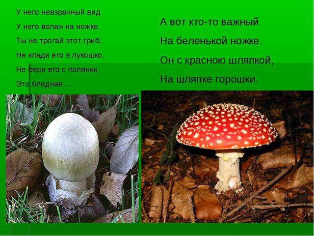 У него невзрачный вид У него волан на ножке. Ты не трогай этот гриб, Не клади...