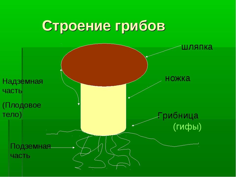 Строение грибов