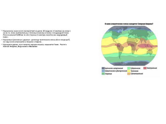 Каучуконосы лучше всего произрастают не далее 10 градусов от экватора на севе...