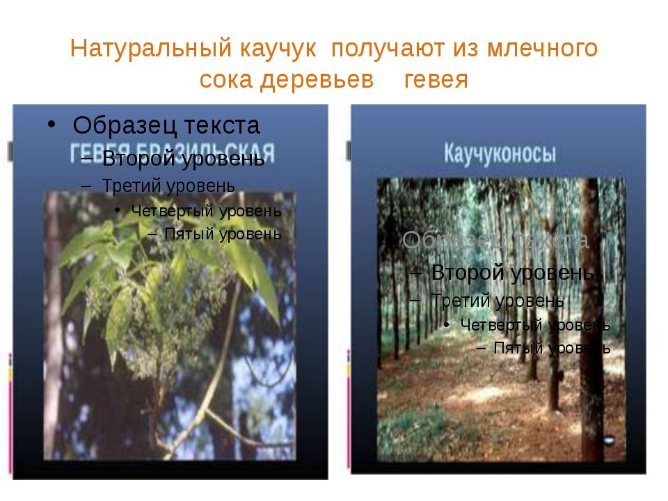 Натуральный каучук получают из млечного сока деревьев гевея