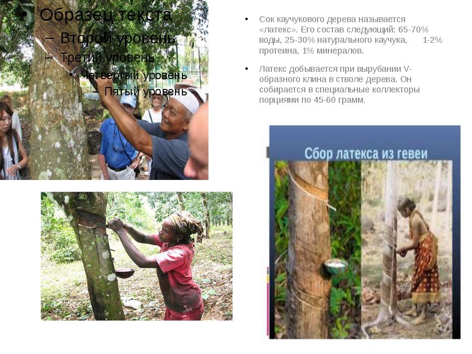 Сок каучукового дерева называется «латекс». Его состав следующий: 65-70% вод...