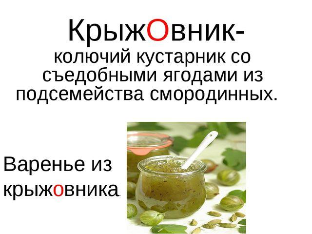 КрыжОвник- колючий кустарник cо съедобными ягодами из подсемейства смородинны...