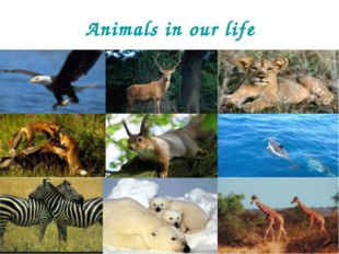 Animals in our life
