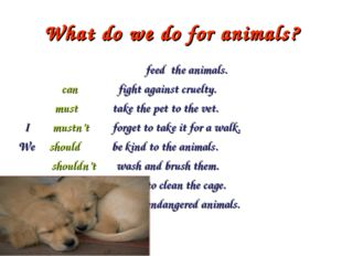 What do we do for animals?  feed the animals.  can fight against cruelty.